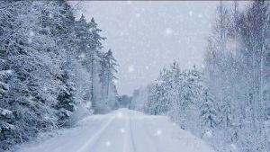 Buy video snowfall in Forest