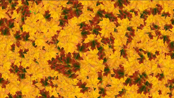 Buy autumn leafs background video