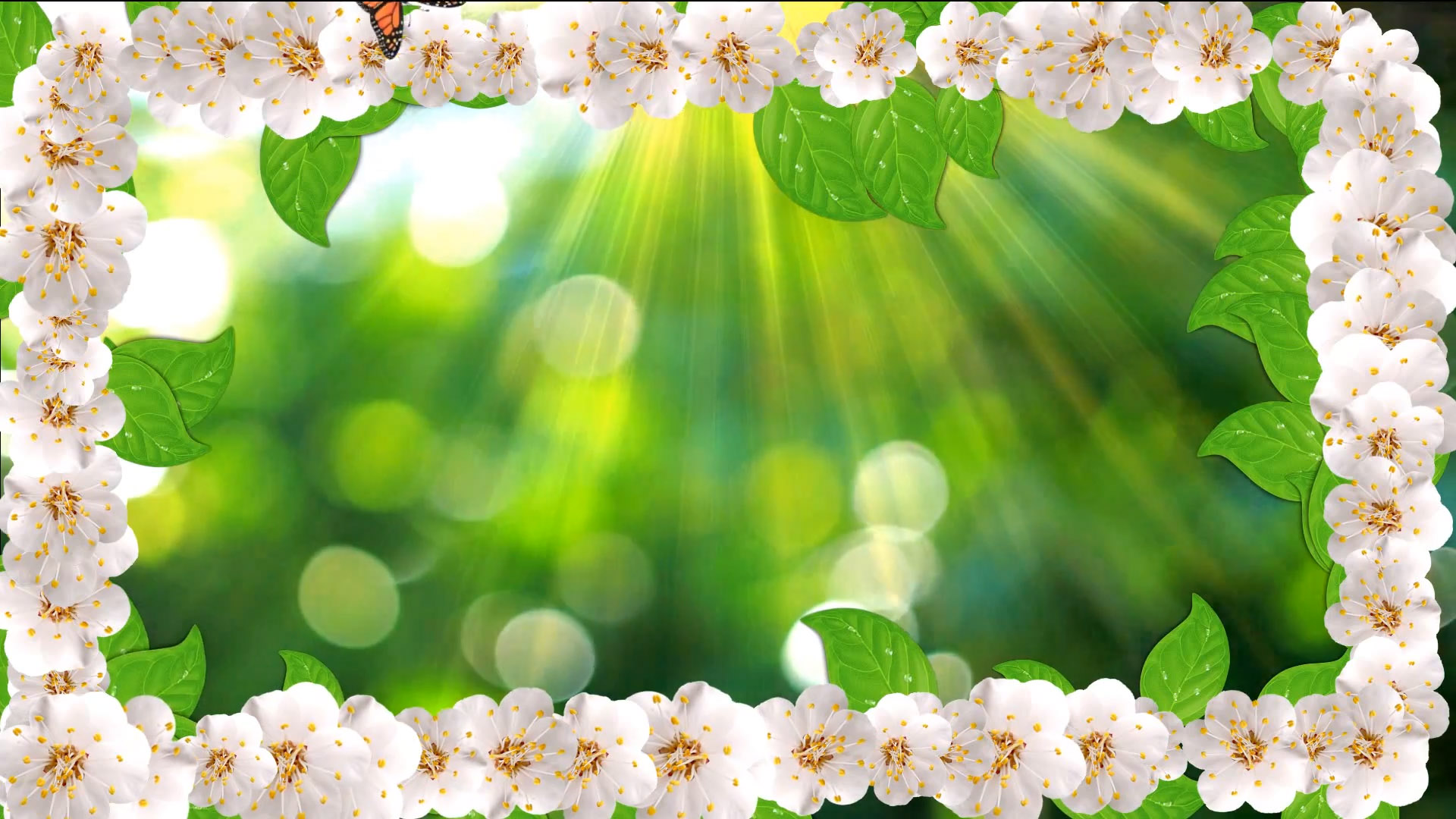 Buy White Flower Frame Video On Animated Spring Background