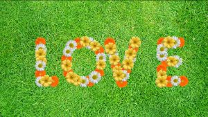 Buy Love Video on grass background