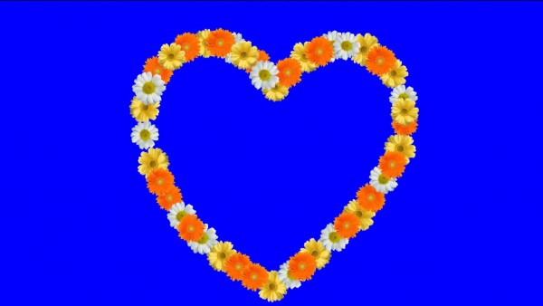 Buy colors flowers hearts