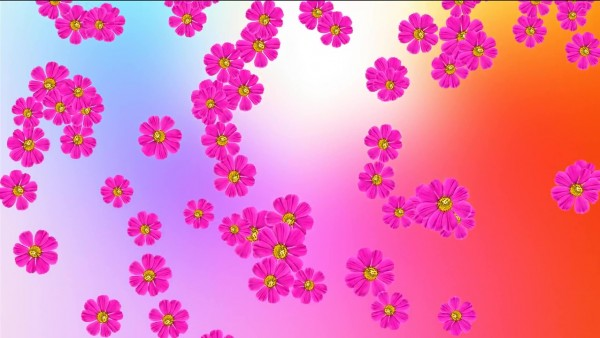 Buy Pink Flowers On color background
