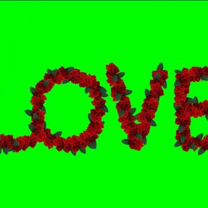 Buy video red roses text - LOVE