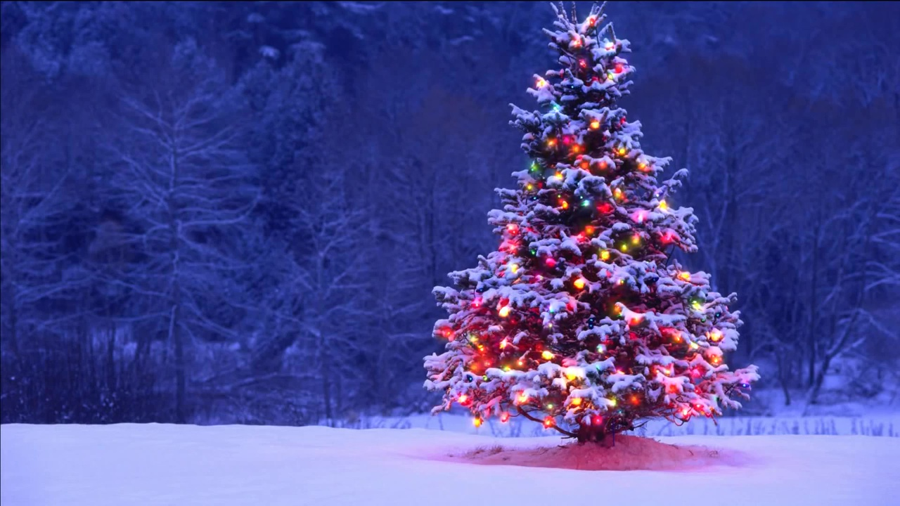 Buy Animated Christmas Tree With Garland. Video Christmas