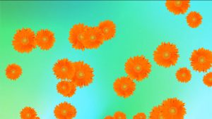 Buy Yellow flowers on turquoise background video