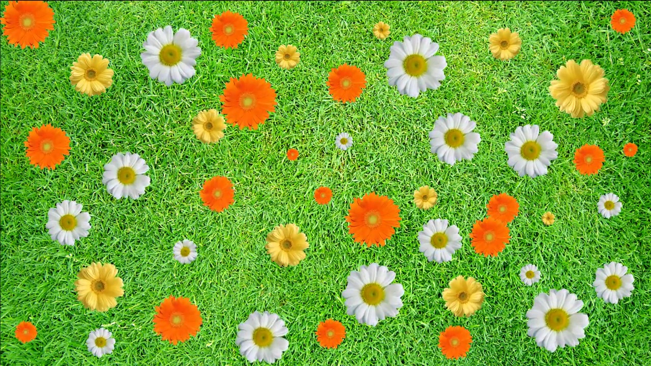 Buy animated color flowers video background on green grass.