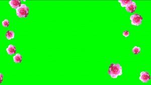 Buy falling roses video