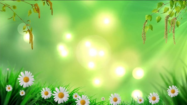 buy spring background