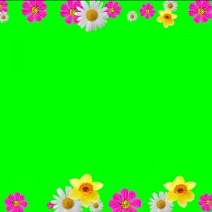 Buy flower frame video background