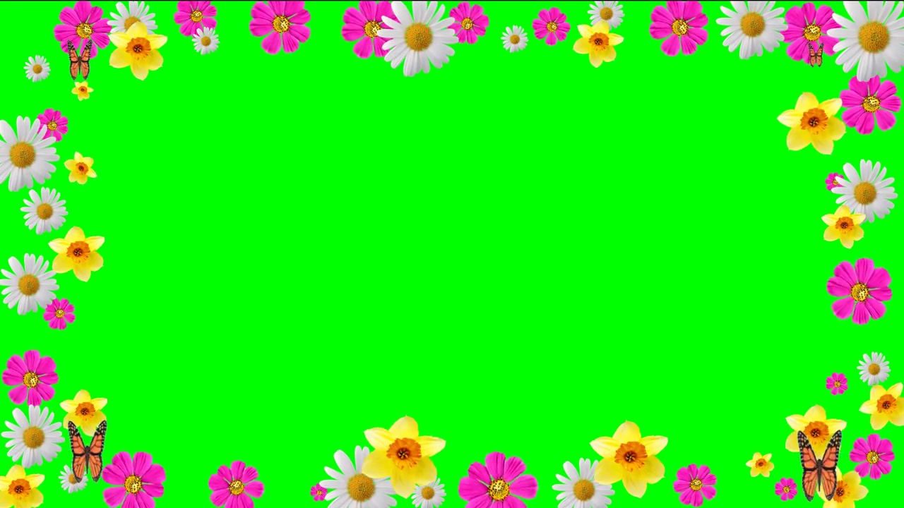 Buy flower color frame video. Frame flowers with chroma key.