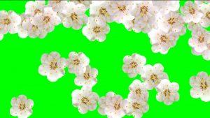 Buy white flower background