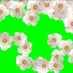 Buy white flower background
